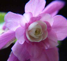 Double Impatience Flower by MaeBelle