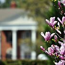 Down South In Spring by Gretchen Dunham