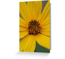 Heliantbus tuberosus flower Greeting Card