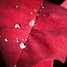 Droplets on Red Velvet Leaf by JLPPhotos