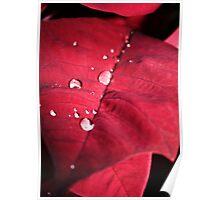 Droplets on Red Velvet Leaf Poster