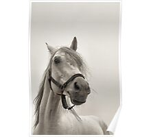 Pale Horse Poster