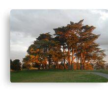 sunset trees, or Autum ? Canvas Print