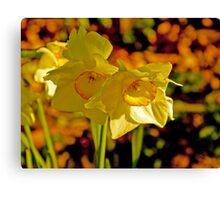 Daffodiles  Canvas Print