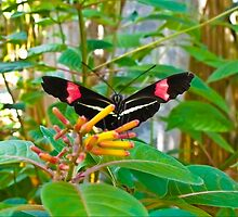 Beautiful Black and Red Butterfly on Green Leaves by Autumn-Leann