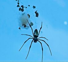 Black Spider On His Web by Autumn-Leann