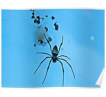 Black Spider On His Web Poster
