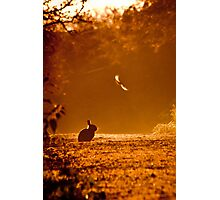 Caught in the Headlights of Dawn Photographic Print