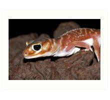 Nephrurus levis levis - Smooth Knob-tailed Gecko Art Print
