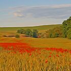 Poppies in a Walla Walla Wheatfield by AdventureGuy