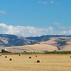 Another Look at Walla Walla Harvest by AdventureGuy