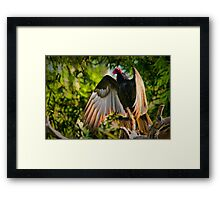 Vulture in the sun Framed Print