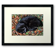 Guess who l found under the Hedgerow.. Framed Print