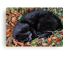 Guess who l found under the Hedgerow.. Canvas Print