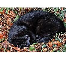 Guess who l found under the Hedgerow.. Photographic Print