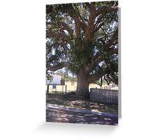Old Cork Tree 1 Greeting Card
