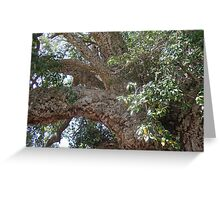 Old Cork Tree 2 Greeting Card