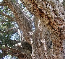 Old Cork Tree 4 by Ian McKenzie
