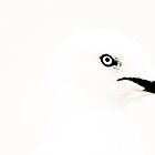 Seagull by kutayk