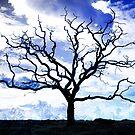 Platinum Tree  by fossaart