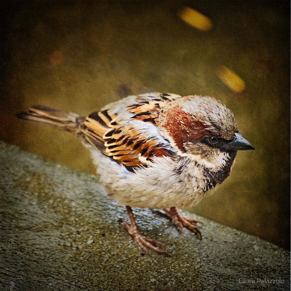 Parking Lot Bird by Laura Palazzolo