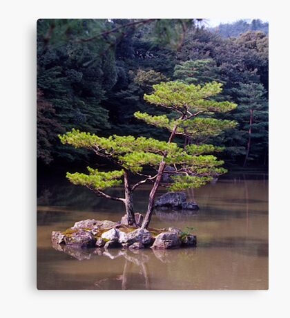 Ornamental Pine, Golden Pavilion, Kyoto , Japan. Canvas Print