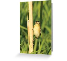 A Gorgeous Reed Warbler Greeting Card