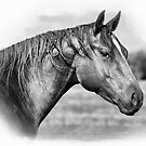 Quarter Horse 2 by julie anne  grattan