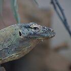 Komodo by sharkyvin