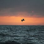 Flying Sillouette by Amy Dee