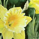 Daffodil in the Sunshine by Anne Sainz
