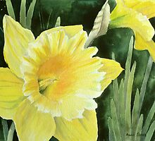 Daffodil in the Sunshine by Anne Sainz