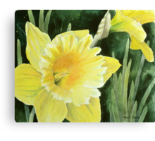 Daffodil in the Sunshine Canvas Print