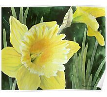 Daffodil in the Sunshine Poster