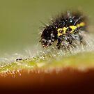 Calvin Caterpillar by katpartridge