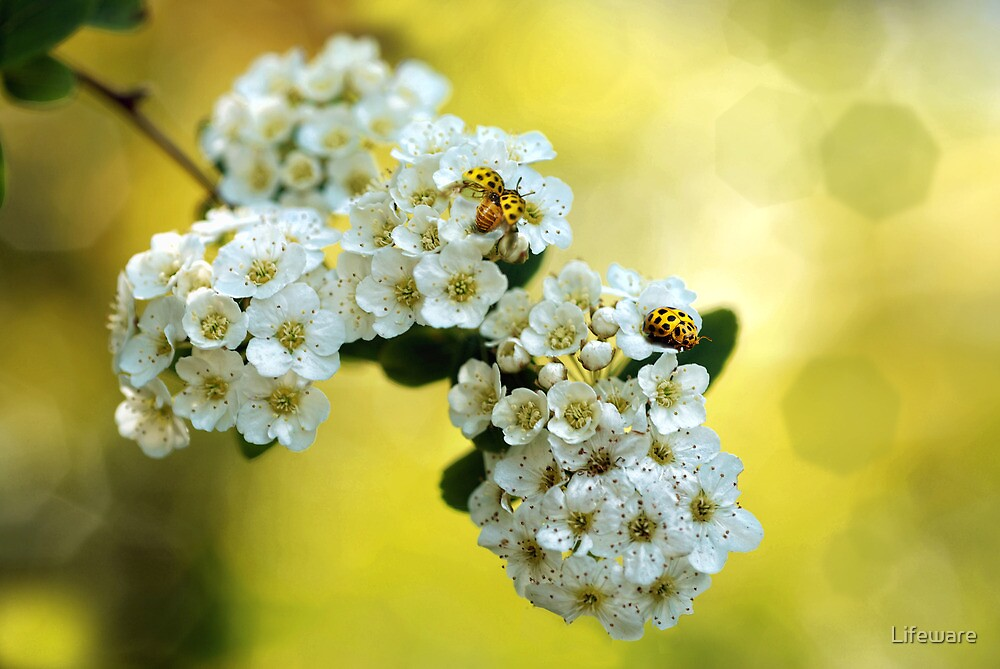 Spring by Lifeware