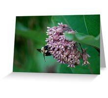 Bumble Bee on Milkweed Flower Greeting Card