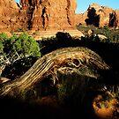 Cedar Arch by Dawn Parker