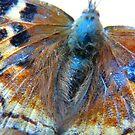 Pretty Butterfly by MaeBelle