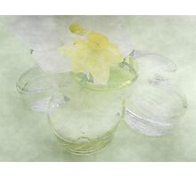 Translucent Daffodils, and Glass Daisy Photographic Print