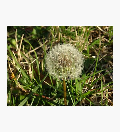 The Dandelion Matrix Photographic Print