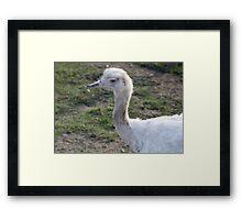 Blue Eyed Blonde Framed Print