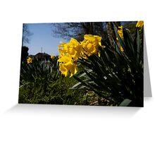 Roadside Daffodils Greeting Card