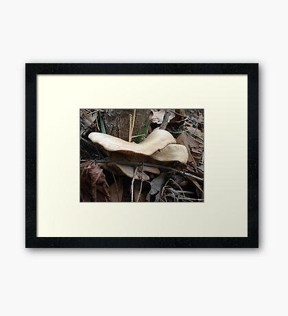 SHELF FUNGUS - CREEKSIDE Framed Print