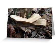 SHELF FUNGUS - CREEKSIDE Greeting Card