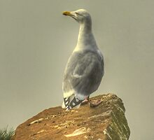 The Gull At The Edge Of England by Jamie  Green