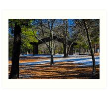 Contrast in the Pines Art Print