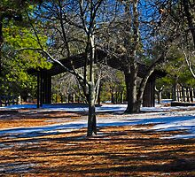 Contrast in the Pines by Paul Gitto