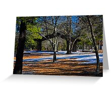 Contrast in the Pines Greeting Card