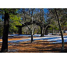Contrast in the Pines Photographic Print